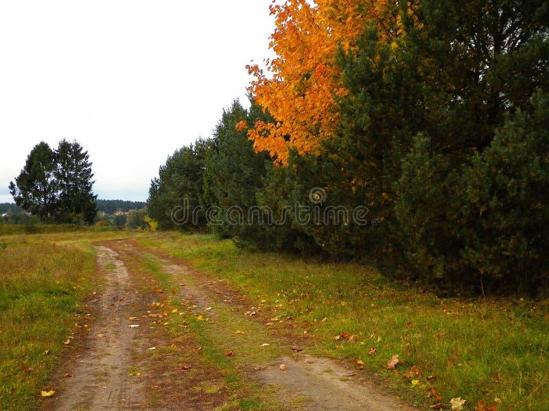 First days of autumn - orange color tree. Kashubian Region, Poland. Nature concept royalty free stock image