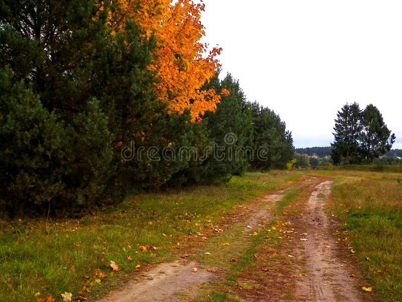 First days of autumn - orange color tree. Kashubian Region, Poland. Nature concept stock photos