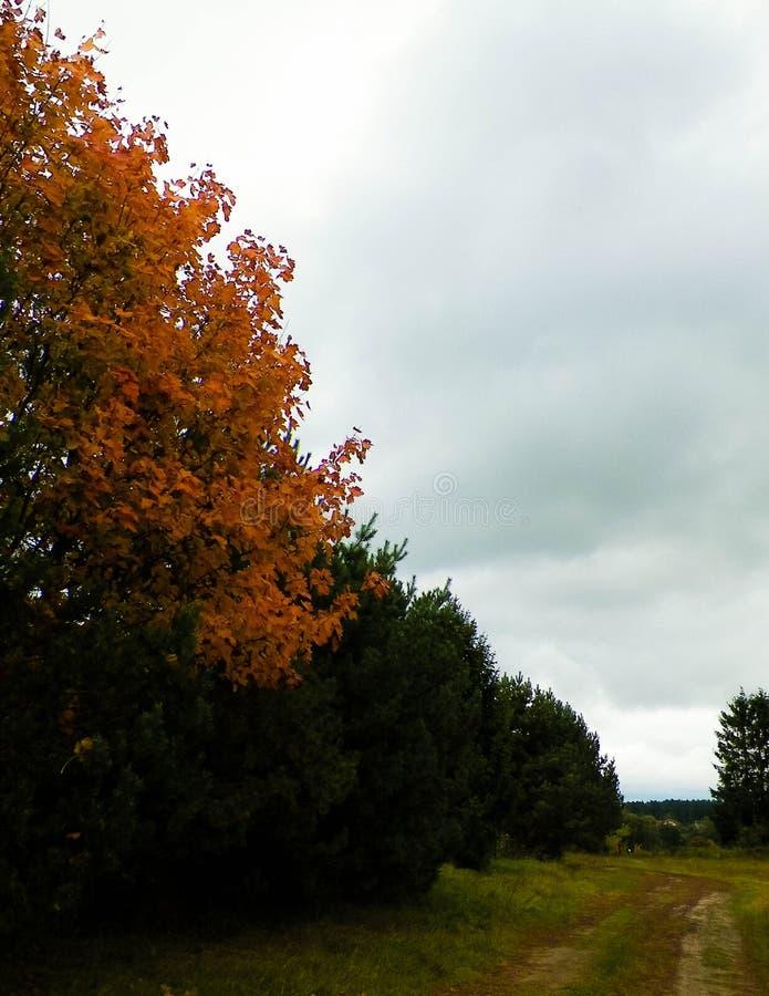 First days of autumn - orange color tree. Kashubian Region, Poland. Nature concept stock photo
