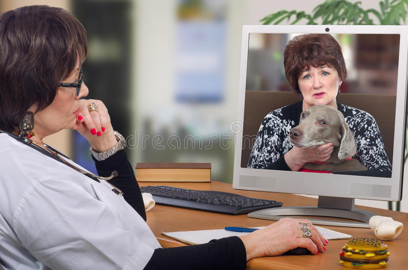 First dog owner visit to virtual veterinarian. Telemedicine veterinarian provides a diagnosis and advice for weimaraner dog on computer monitor. Sitting at the royalty free stock photography