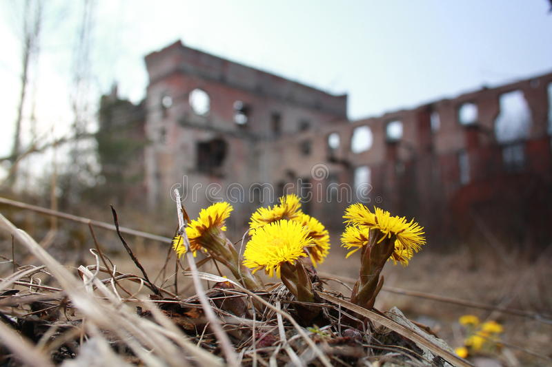 First flower stock photography