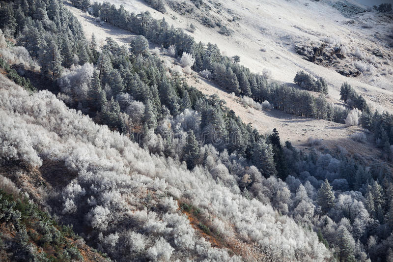 The first frost in the mountains. stock photography