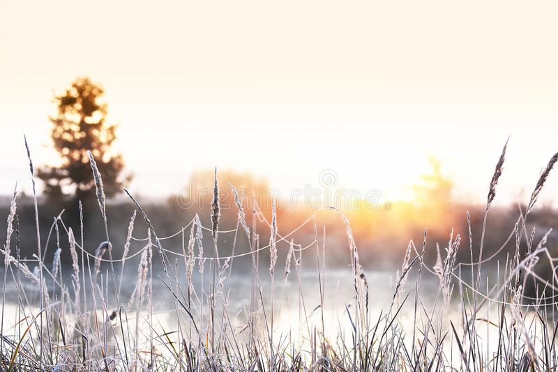 The first frosts in the autumn days. Grass and flowers in hoarfrost on the river bank in the fog in the early morning. Beautiful m royalty free stock photo
