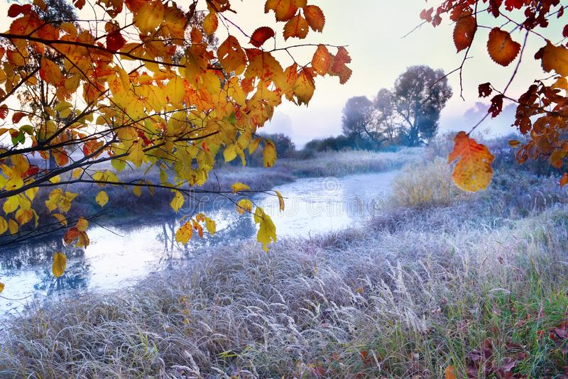 The first frosts in the autumn days. Grass and flowers in hoarfrost on the river bank in the fog in the early morning. stock images