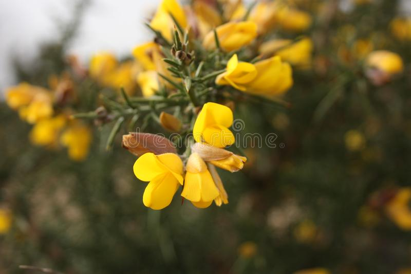 First fruits of flowers. spring is coming. here the first plants of March bloom, the good season arrives.  royalty free stock images