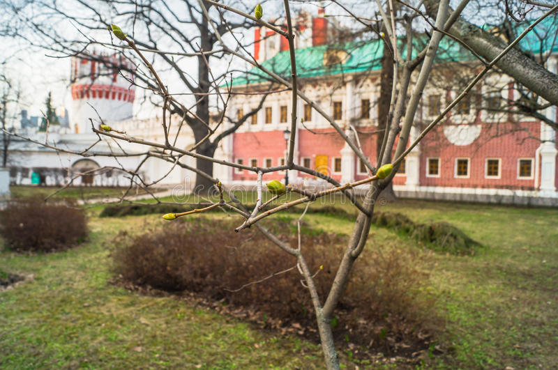 The first green buds on the trees in the Novodevichy Convent. Moscow. On the background you can see the watchtower Naprudnaya and the building of the chambers royalty free stock photo