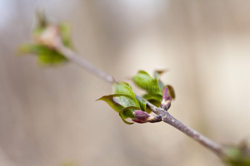 First green leaves stock photography