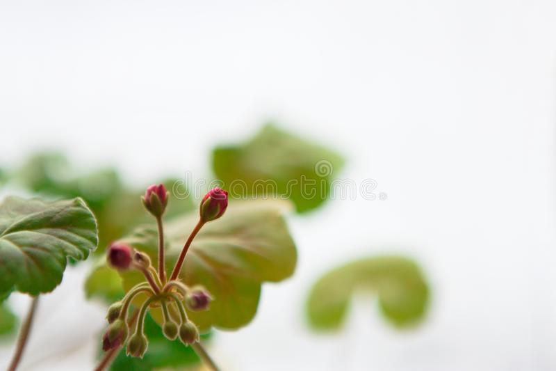 The first green leaves and flowers in the spring. The snow melting. The coming of spring, the awakening of nature, the first flowers and leaves concept stock photos