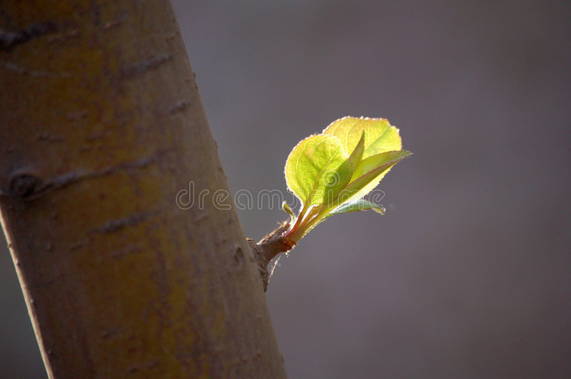 First leaves in spring stock photos