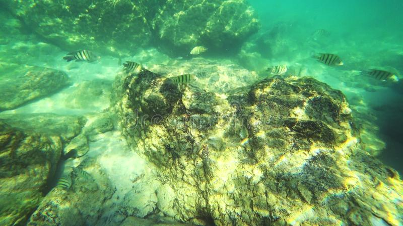 First-person看法,一个人游泳在看水下的世界和小热带鱼的水下 图库摄影