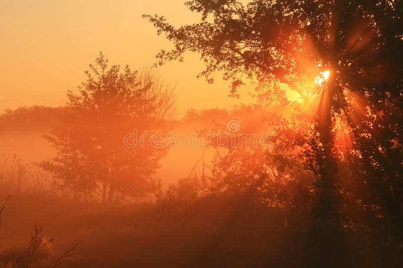 The first rays of the rising sun. Pass through the fog stock images