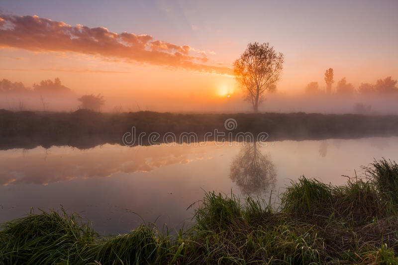 The first rays of the rising sun at misty river royalty free stock photos