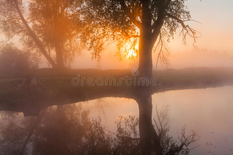 The first rays of the rising sun at misty river royalty free stock images
