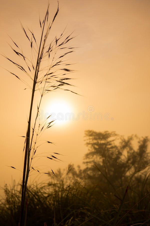 The first rays of the rising sun royalty free stock photography