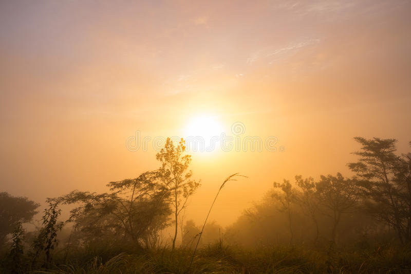 Download The First Rays Of The Rising Sun Stock Image - Image of gold, dawn: 81962513
