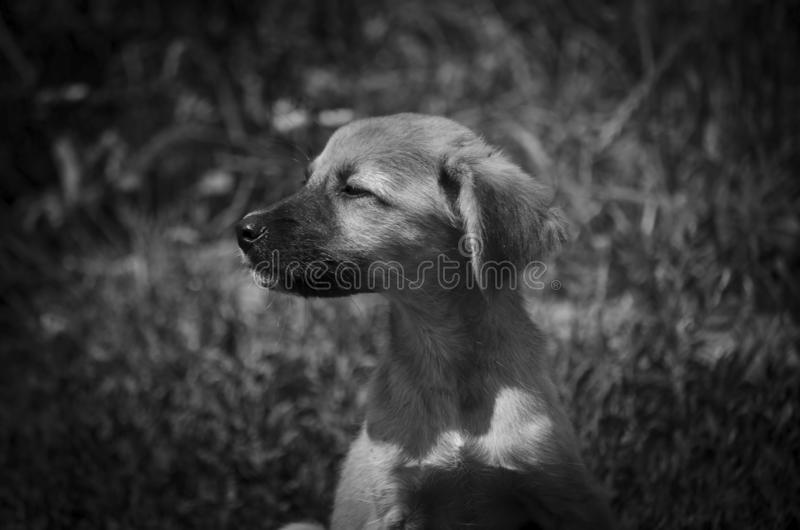 Such a cute puppy basks in the sun. Black and white stock image