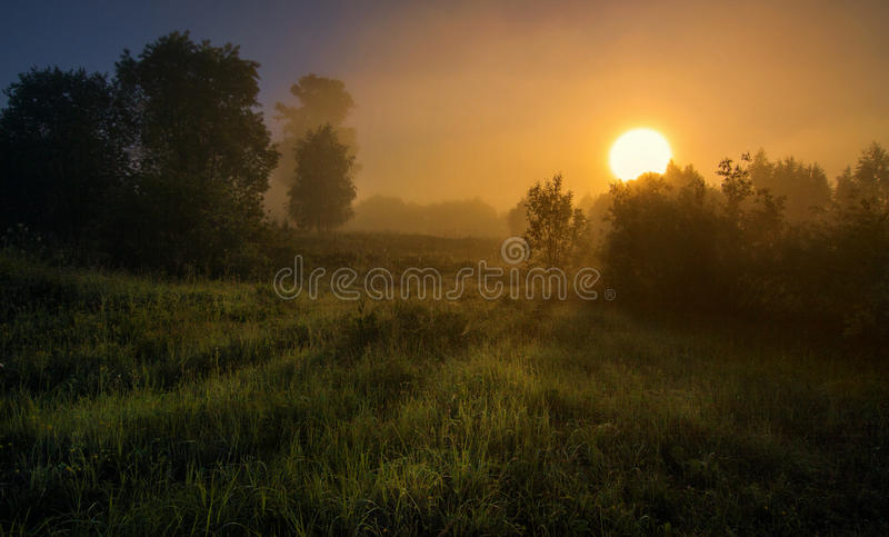 Download First rays stock photo. Image of branch, morning, dawn - 88548966