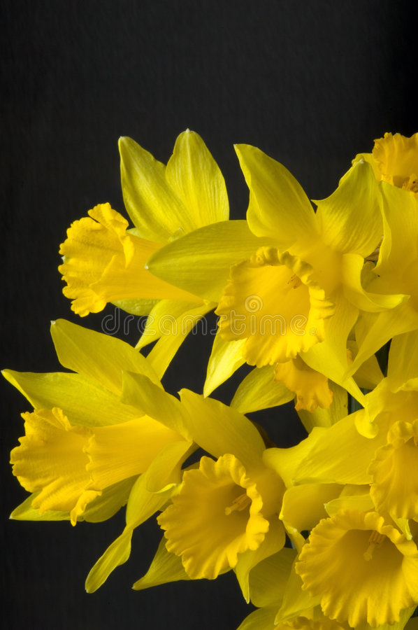 Download First Sign of Spring stock photo. Image of april, seasons - 90258