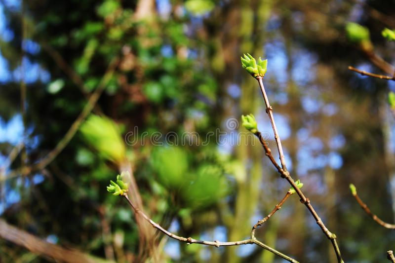 First signs of spring background. Great for background, neutral. First signs of spring season, eye-friendly green and blue composition, forest wakes up after stock photography