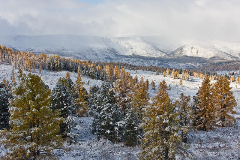 Download First snow stock image. Image of north, siberia, frost - 15573021