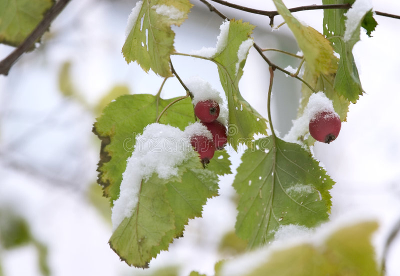 First snow 2 royalty free stock images