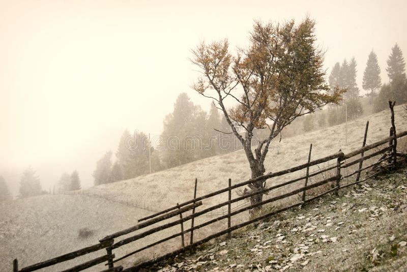 Download First snow stock photo. Image of landscape, mystical - 28796702