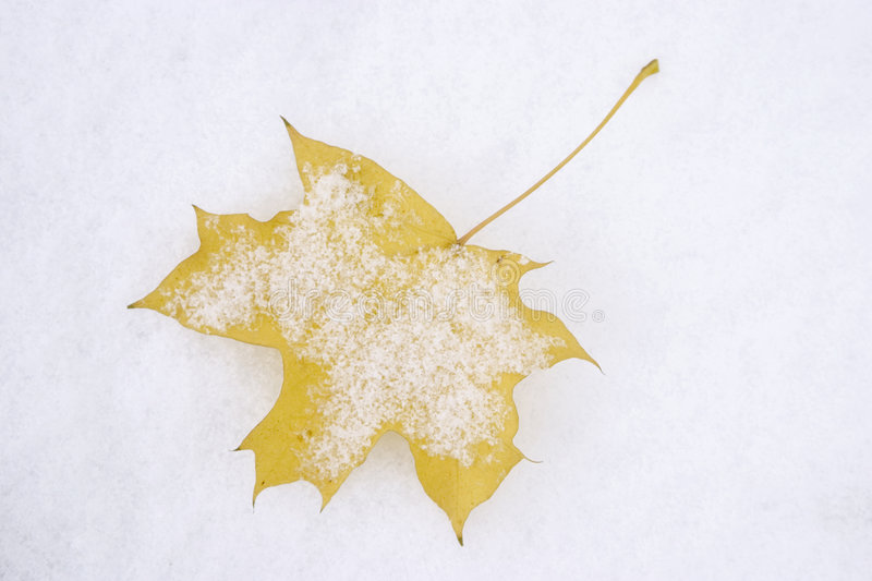 Download First snow stock image. Image of detail, natural, autumn - 313557