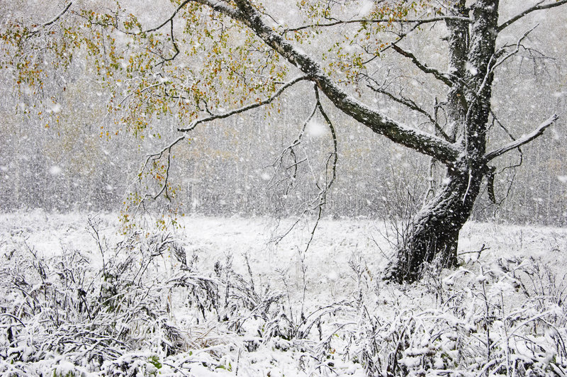 Download The first snow stock photo. Image of snow, leaves, snowstorm - 3441706