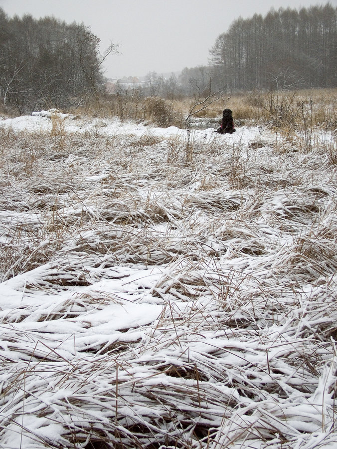 Download First snow stock photo. Image of reed, yellow, country - 355406