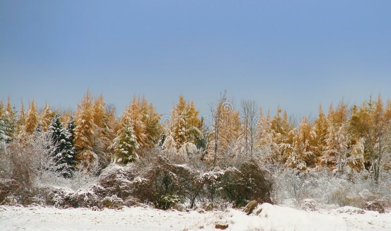 Download First Snow stock photo. Image of colour, nature, color - 6963184