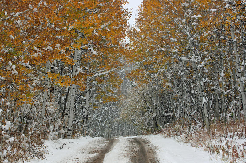 First Snow In Aspen Alley Stock Photo