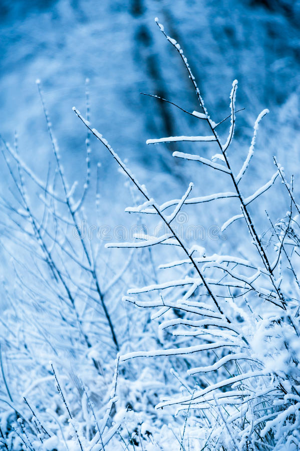Download First Snow Covered Branches Stock Images - Image: 35590404