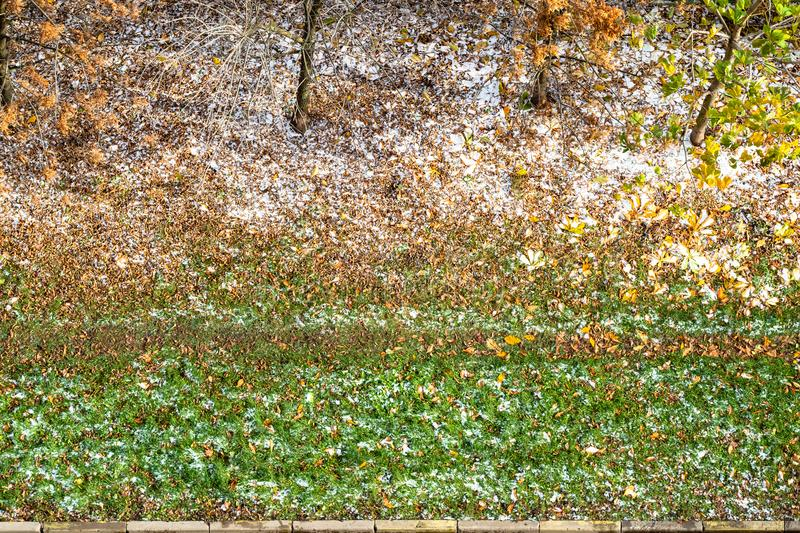 First snow and fallen leaves cover green lawn. Aerial view of the first snow and fallen yellow leaves cover green grass at lawn in city garden stock photography