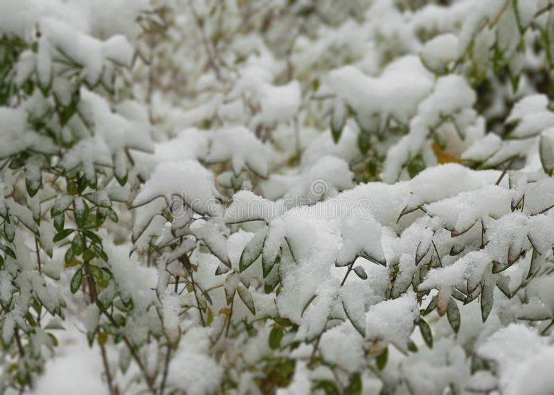 The first snow fell in the fall. Snow lies on green and yellow leaves. Snowfall and winter. Cloudy snowy weather. The first snow fell in the fall. Snow lies on stock images