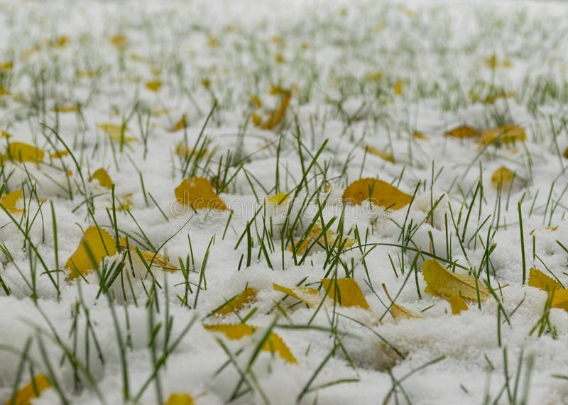 The first snow fell in the fall. Snow on the green grass with yellow leaves. Cloudy snowy weather. Background stock images