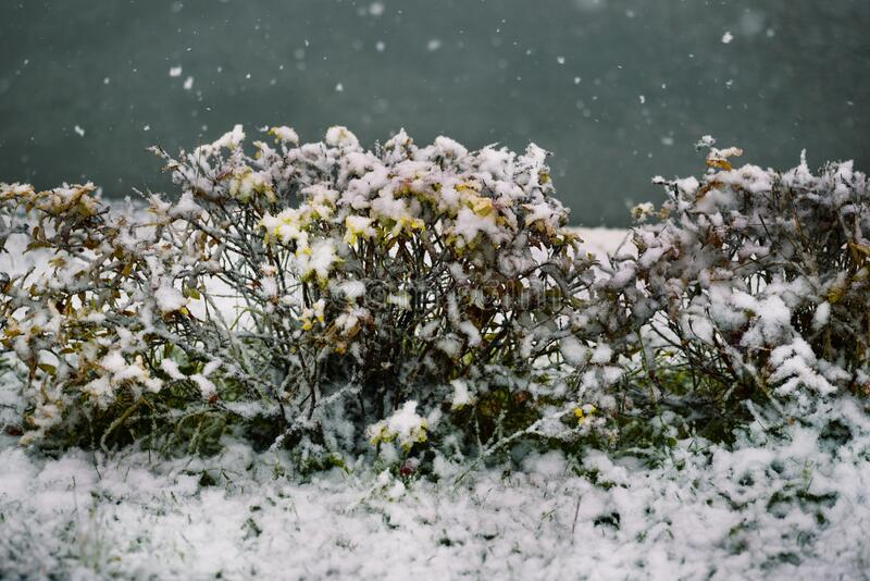 First snow, snow flakes falling. Snowfall and the first snow on the street in winter. Frosty and cold weather in winter.  stock photography