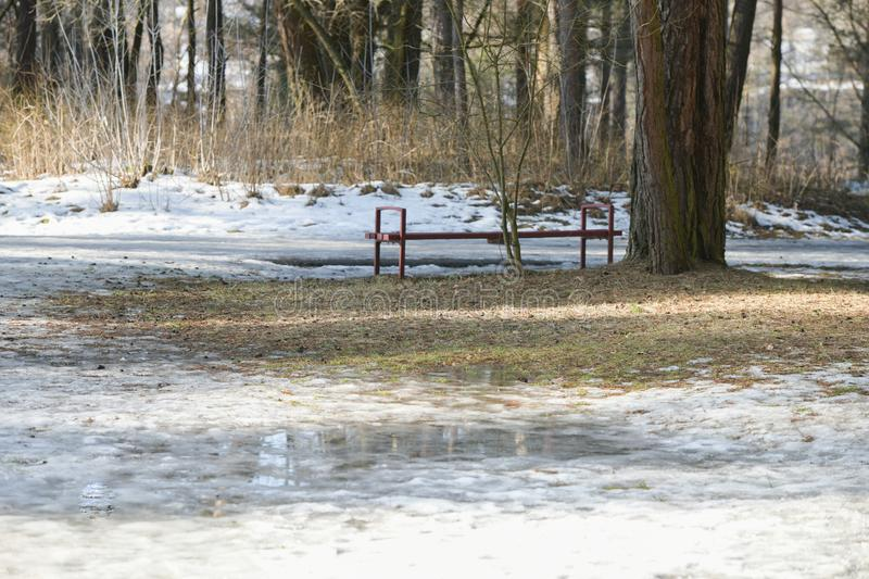 First snow in the forest. empty park, forest. bench in the woods royalty free stock photos