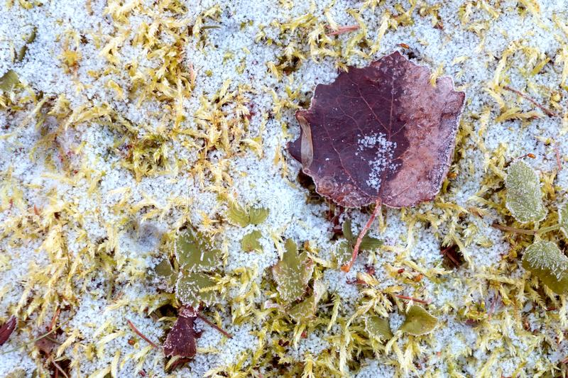 First snow on the green grass and fallen leaves in autumn. Symbol of the coming winter. Natural background texture.  stock image