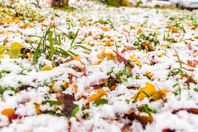 The first snow on the grass and fallen leaves royalty free stock image
