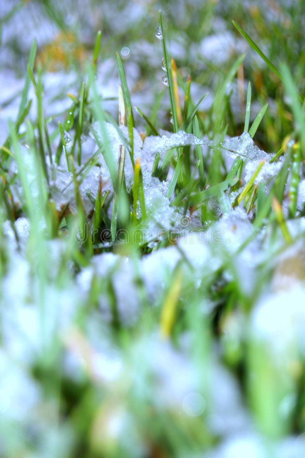 First Snow on Lawn stock photos