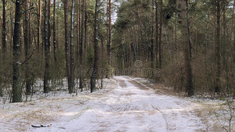 First snow on a path in the dark forest stock photos