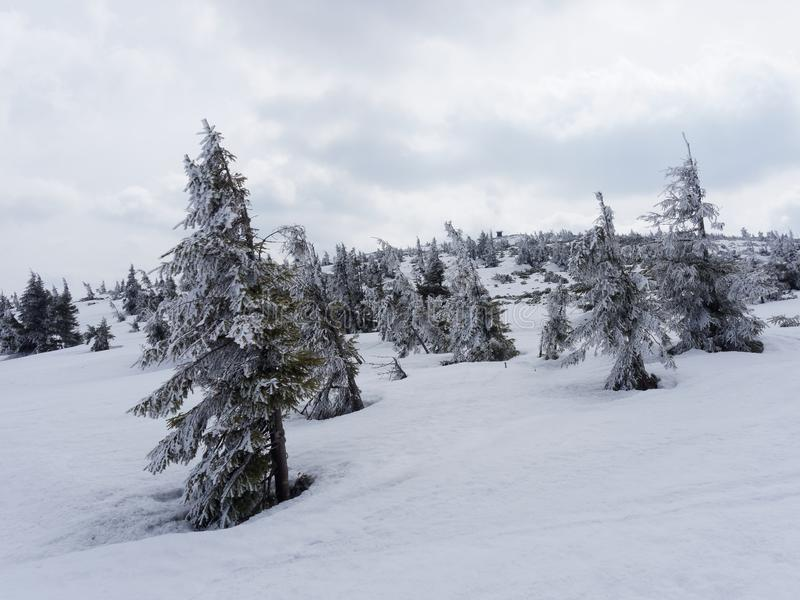 First snow in Poland stock image