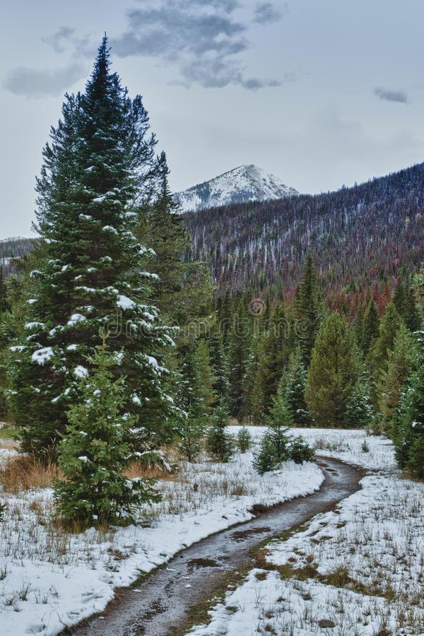 First snow in the Rocky mountains forest. stock images