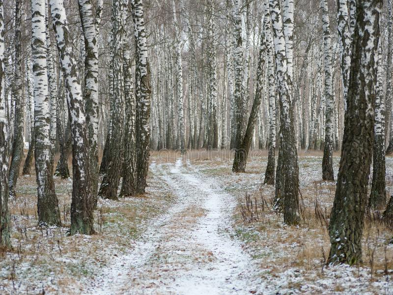 First snow. winter forest snowy white road. 2019 royalty free stock photography