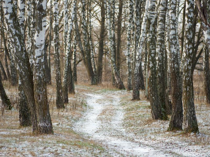 First snow. winter forest snowy white road. 2019 stock images