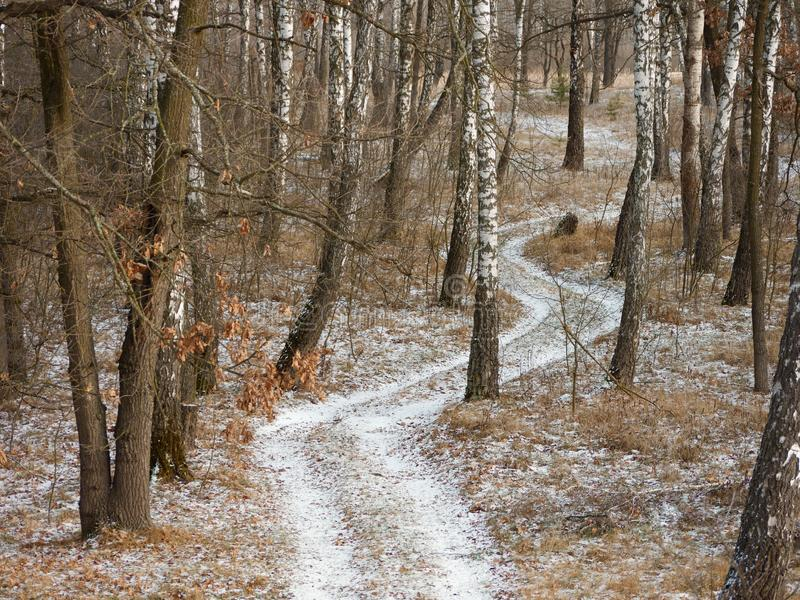 First snow. winter forest snowy white road. 2019 royalty free stock photo