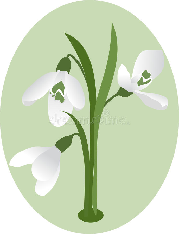 Download The first snowdrops. stock vector. Image of seasonal - 12492386