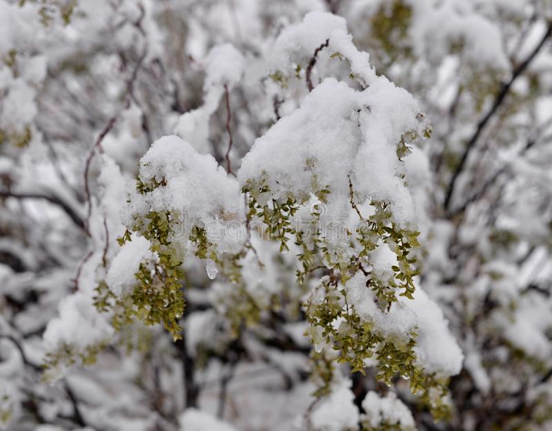 Snow in the high desert. First snowfall of 2019 in California high desert royalty free stock photography