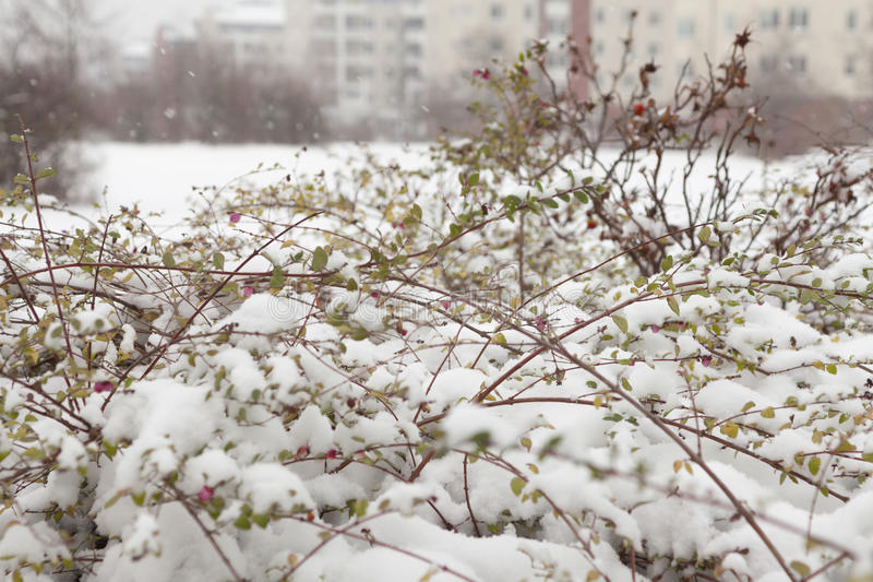 The first snowstorm stock photography