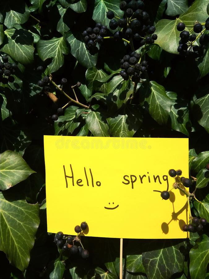 First spring day inscription on paper hello spring on nature background stock images